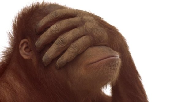 Orangutan (Pongo pygmaeus)  - great apes go through midlife crises just like humans