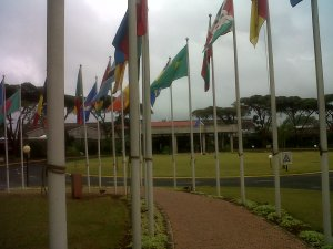 The avenue of flags towards the main United Nations building